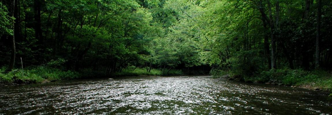 banner_swan_creek